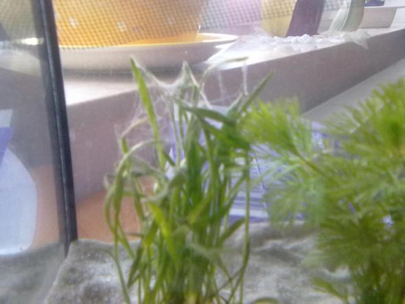 ## - (Wasser, Aquarium, Aquaristik)