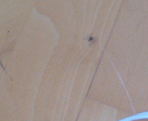 eine springende mini spinne ist bei mir im zimmer kann mir jemand weiter helfen springen. Black Bedroom Furniture Sets. Home Design Ideas