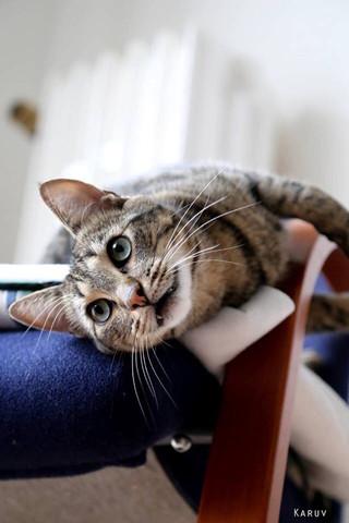 Jeff der Kater - (Tiere, Katze, Katzen)