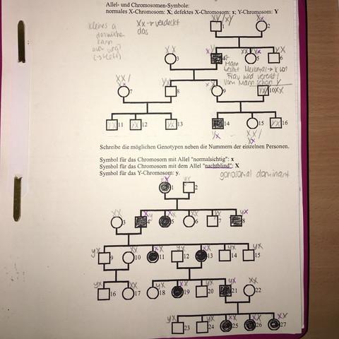 Unterer Teil - (Biologie, Stammbaum, Stammbaumanalyse)