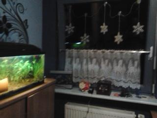 starker algenwuchs im aquarium warum fische aquaristik zierfische. Black Bedroom Furniture Sets. Home Design Ideas