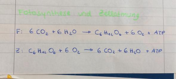 Bio - (Biologie, Gleichungen, fotosynthese)