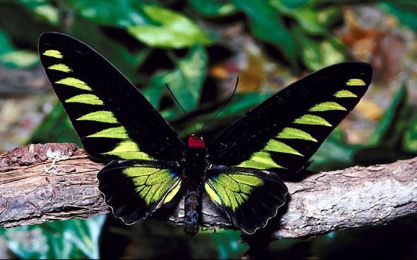 Stimmt es das Schmetterlinge nicht berührt werden dürfen?