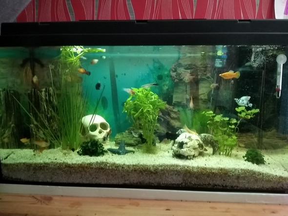 Stress im Aquarium?