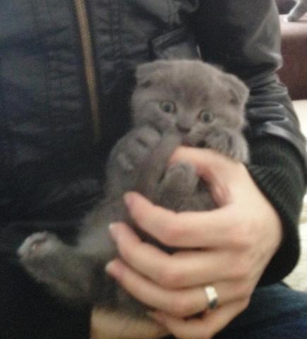 der kleine Kater - (Tiere, Katzen, Namen)