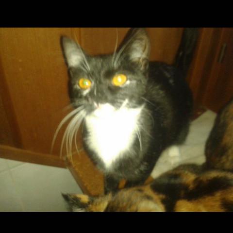 Für diese Katze soll ein Name gefunden werden  - (Katze, Namen, Außergewöhnlich)