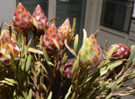 suche den namen einer pflanze die kein wasser braucht freizeit trockenblumen. Black Bedroom Furniture Sets. Home Design Ideas