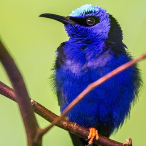 suche den namen einiger vogelarten mit fotos tiere natur v gel. Black Bedroom Furniture Sets. Home Design Ideas