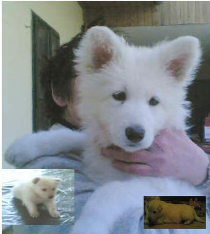 Suche Fuchsbär Hund Hunderasse