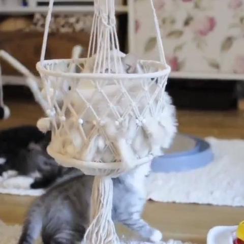 Sowas Suche ich  - (Tiere, Katze, Katzen)