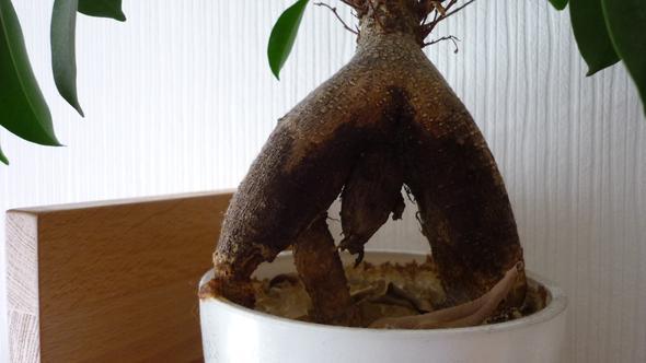 Stamm - (Garten, Pflanzen, Natur)