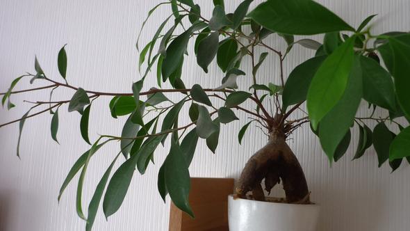 Ganze Pflanze/Blätter - (Garten, Pflanzen, Natur)