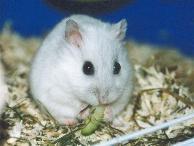 Ein Dsung in Perl - (Tiere, Namen, Hamster)
