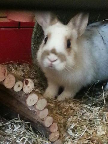 Süßemaus - (Name, Kaninchen)