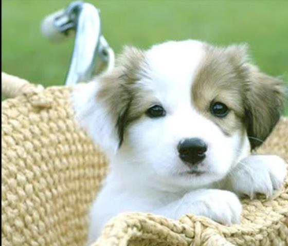 DER SÜSSESTE HUND ALLER ZEITEN - (Hund, süß)