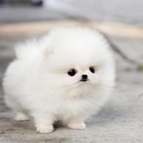 Hier dieser kleine süße *~* - (Hund, klein, süß)