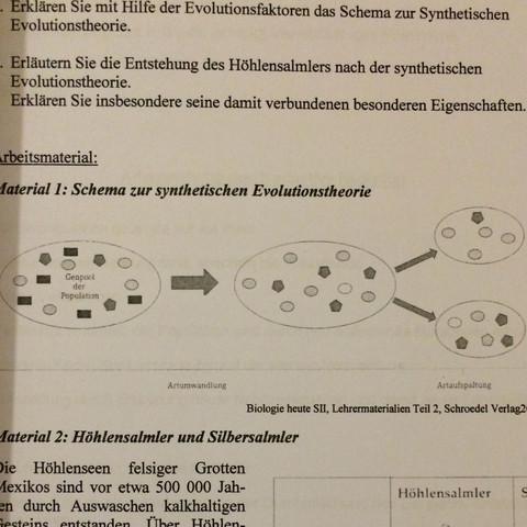 Synthetische Evolutionstheorie Schema Schule Biologie Abitur