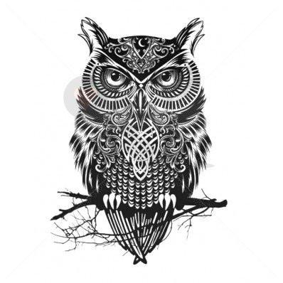 Tattoo Eule Bedeutung Symbol