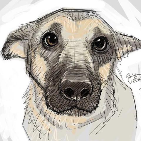 Vorlage (in diesem Stil soll es gezeichnet werden )  - (Hund, Tattoo, Skizze)