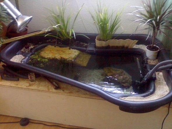 teich ins wohnzimmr bauen (schildkröten), Garten ideen