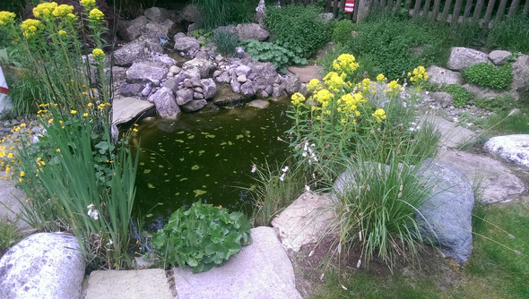grüne Luftbläschen waren schon viel mehr - (Fische, Teich, Gartenteich)