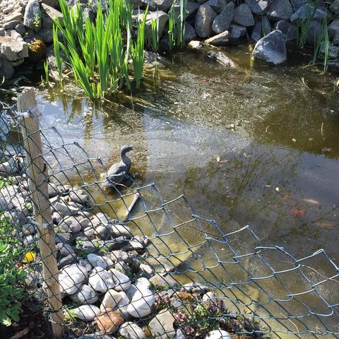 Viel Fisch dreckiger Teich