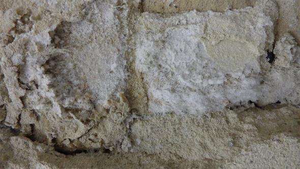 Weißer Schimmelpilz im Lager - (Mietrecht, Schimmel, Gewerbefläche)