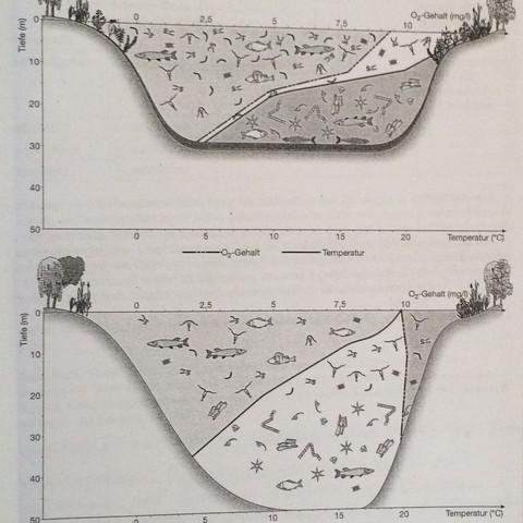 Abbildung  - (Biologie, Temperatur, See)