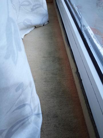 teppich am fenster richtig reinigen schimmel reinigung feuchtigkeit dreck. Black Bedroom Furniture Sets. Home Design Ideas