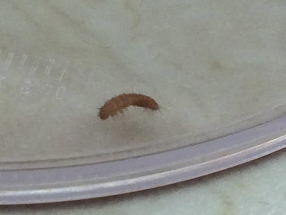 Bild 4 - (Tiere, Käfer, Ungeziefer)
