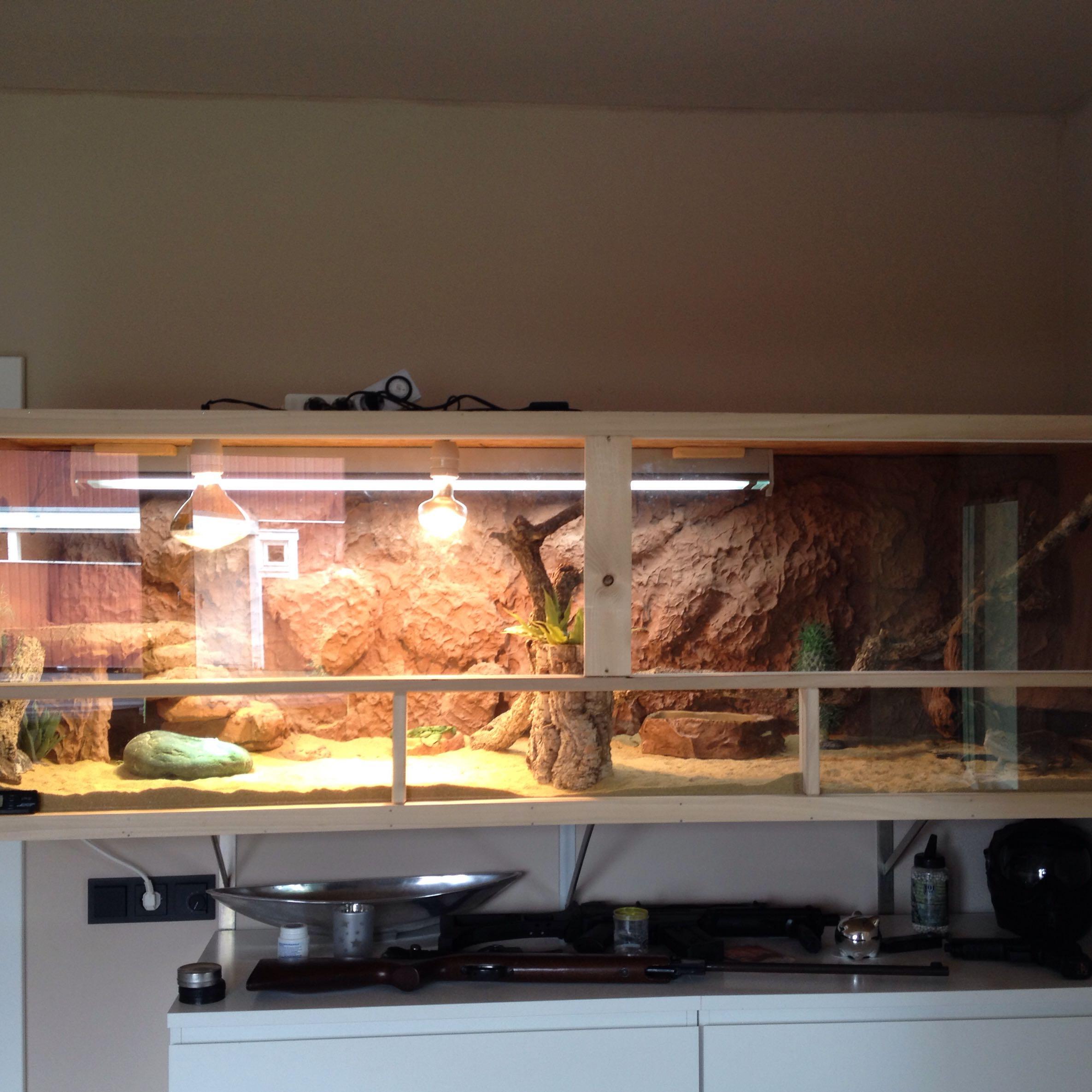terrarium bartagame 180 cm mal 60 zu klein gr e. Black Bedroom Furniture Sets. Home Design Ideas