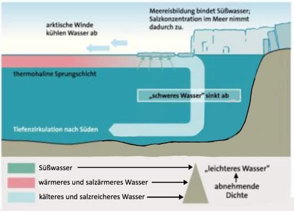 Thermohaline Konvektion in der Arktis?