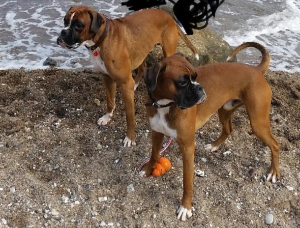 Meine zwei Hunde rechts Hans links Timo - (Gesundheit, Ernährung, Hund)