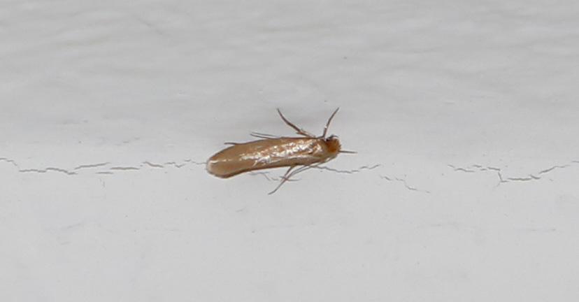 Tierchen in der wohnung insekten for Kleine fliegen in der wohnung