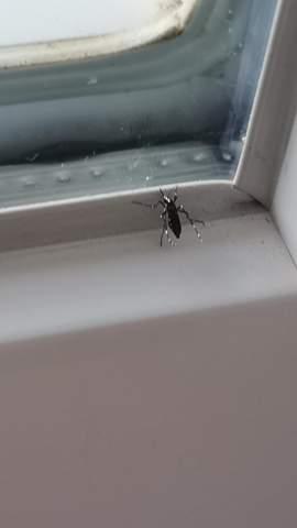 Tigermückenstich?