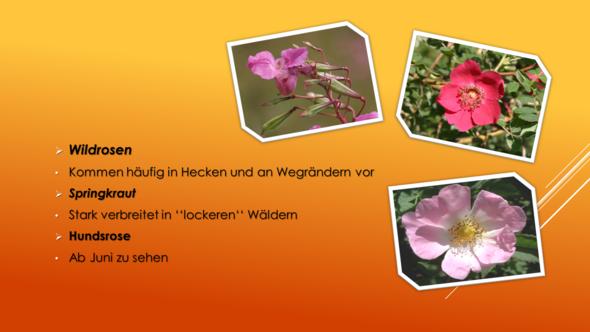 Powerpoint 2013 - (Schule, Freizeit, Technik)