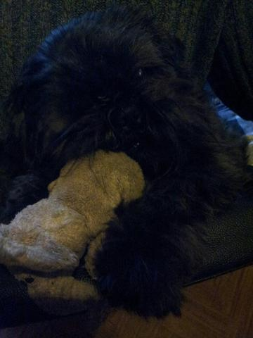 Mein kleiner... - (Tiere, Hund, Tierarzt)