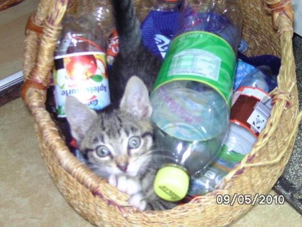 Jacky1 - (Training, Katze)