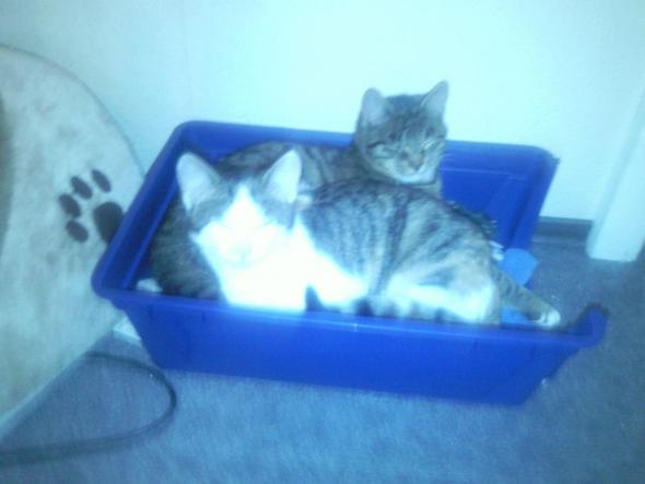 Meine 2 Katzen ♥ - (Training, Katze)