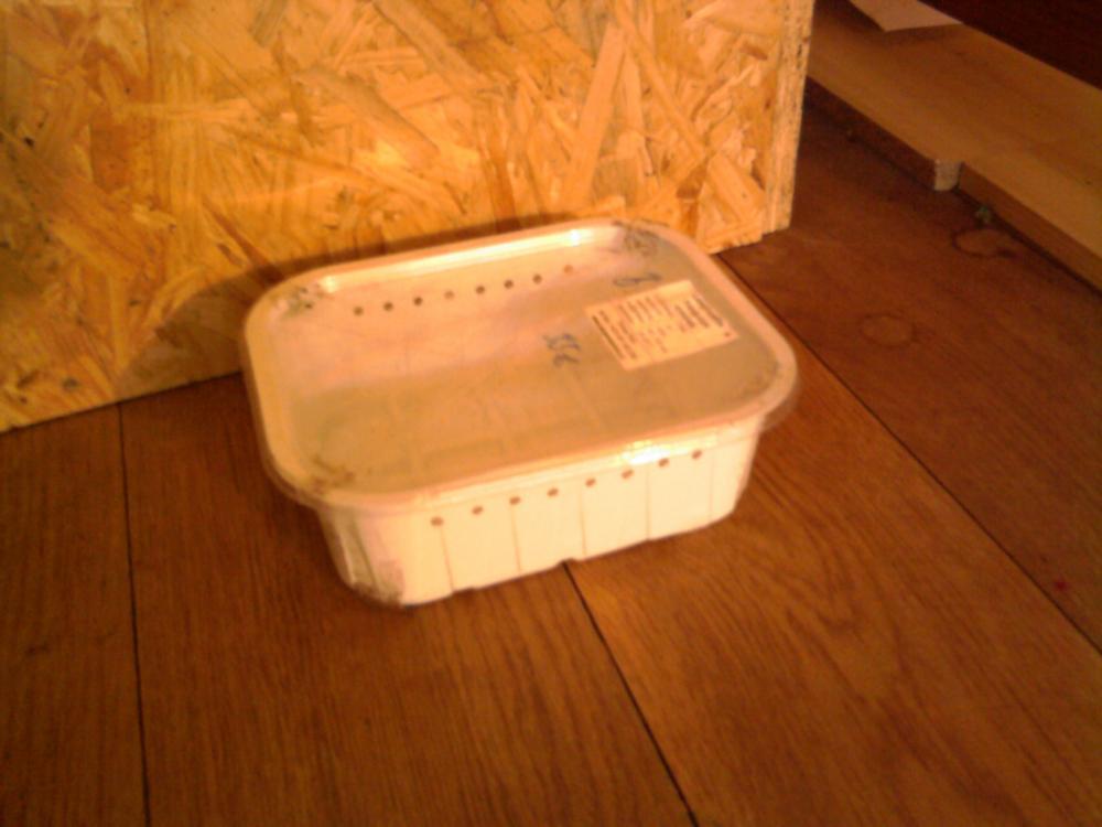 transportbox f r reptilien amphibien und insekten transport box. Black Bedroom Furniture Sets. Home Design Ideas