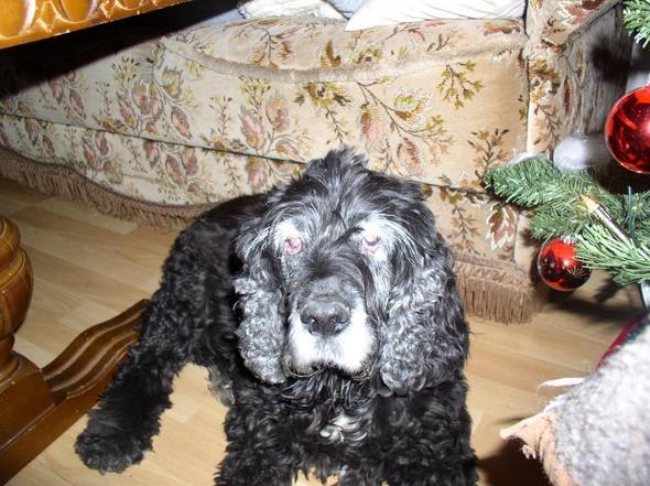 Das letzte Foto 2 Tage vor Weinachten 2009 - (Tod, Trauer)