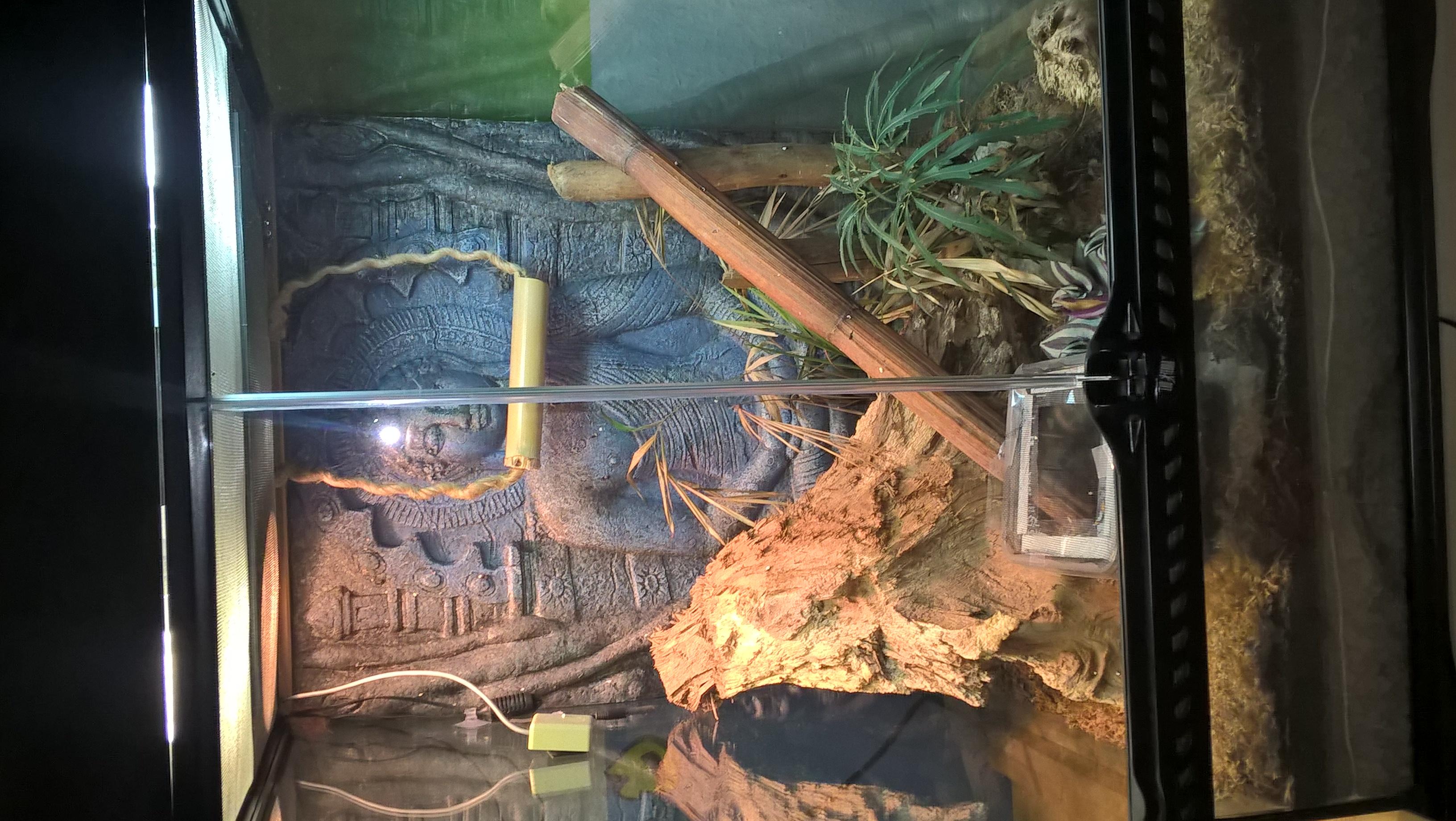 Küchenfliesen Verschönern Womit ~ tropenterrarium verschönern und womit lygodactylus