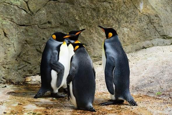 Über was unterhalten sich die Pinguine wohl?