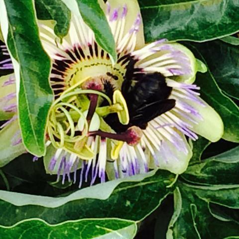 Käfer  - (Insekten, Kroatien, Käfer)