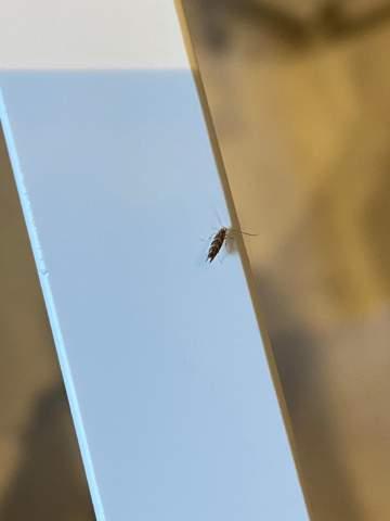 Um was für ein Schädling handelt es sich?