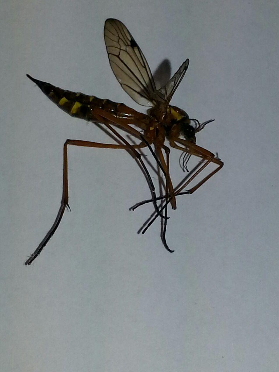 um was für eine art insekt handelt es sich auf dem foto