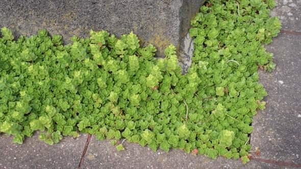 Um was für eine Pflanze handelt es sich hier?