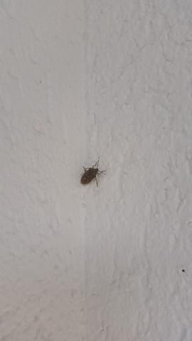 insekten gute fragen des monats. Black Bedroom Furniture Sets. Home Design Ideas