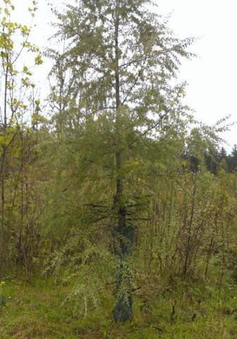 ganzer Baum - (Biologie, Natur, Baum)