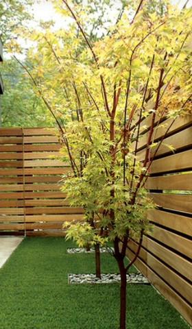 Baum - (Garten, Pflanzen, Baum)
